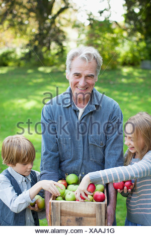 Grandfather and grandchildren with bushel of apples in orchard - Stock Photo