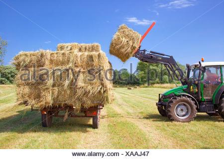 seek hay - Stock Photo