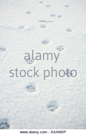 Animal tracks in the snow - Stock Photo