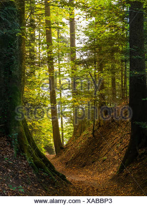 Hollow way in the autumn forest on the Way of St. James - Stock Photo