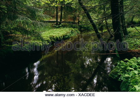 View of stream passing through coniferous forest - Stock Photo