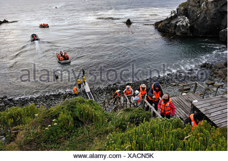 passengers of the cruise ship Stella Australis Cruceros Australis compagny landing on the Horn island, Tierra del Fuego, Chile, - Stock Photo