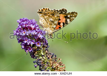 worms eye park garden insect butterfly summer summerly wing spring ...