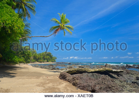 Pacific coast, Corcovado, National Park, Costa Rica, Central America, pacific, coast, beach, palm, Puntarenas, - Stock Photo