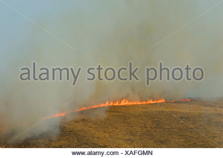 Aerial view of prairie grass fire Alberta Canada.. Dried winter grass ignites easily and fanned by wind quickly spreads across p - Stock Photo