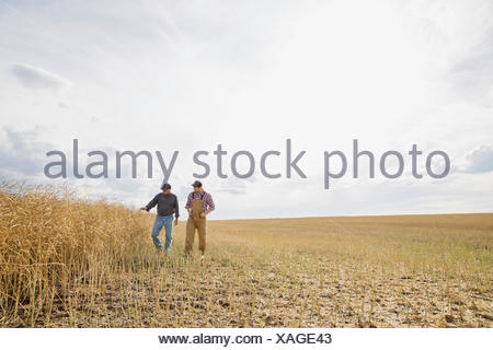 Farmers walking in sunny wheat field - Stock Photo