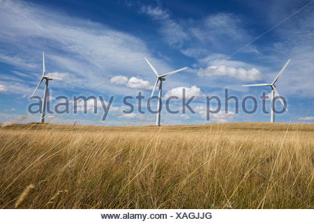 Wind turbines in sunny rural field - Stock Photo