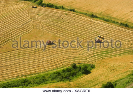 Agriculture - Aerial view of combines harvesting wheat with full grain carts also in the field / Uruguay. - Stock Photo