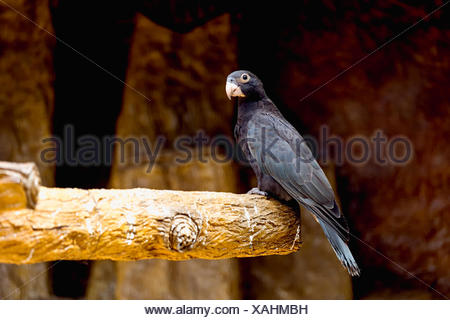Close-Up Of Bird Perching On Wood - Stock Photo