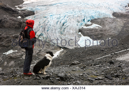 Hiker with a Border Collie looking at a glacier tounge, Norway, Scandinavia, Europe - Stock Photo