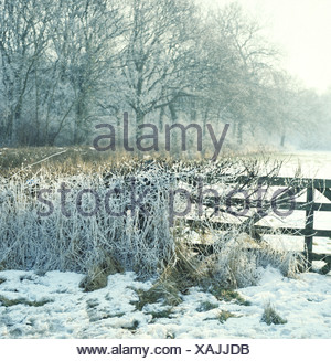 Hedgerow and gate covered with frost and snow in afternoon light - Stock Photo