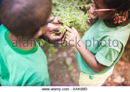 Fathers hands holding plants for son and daughter at forest eco camp - Stock Photo
