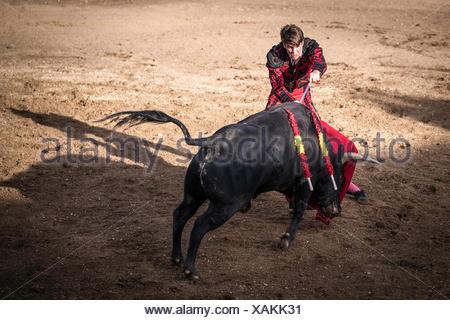 Torero shortly before the death blow, bullfighting, El Barco de Avila, Avila, Spain - Stock Photo