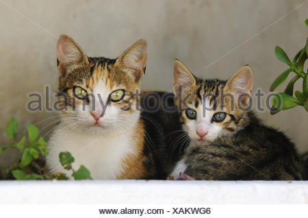 Kitten and mother cat side by side,Cyclades,Greece - Stock Photo