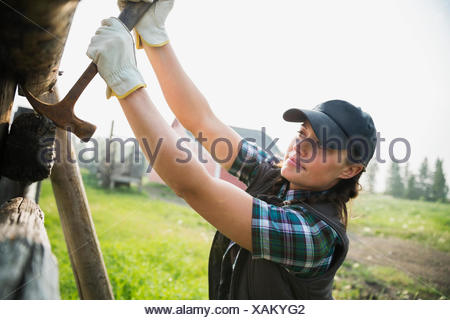 Rancher with hammer replacing fence posts in pasture - Stock Photo