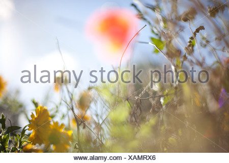Wildflowers - Stock Photo