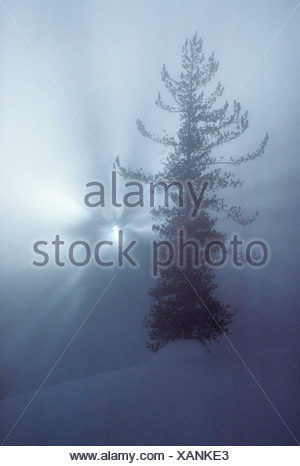 Sunlight Breaking Through Snowy Trees - Stock Photo