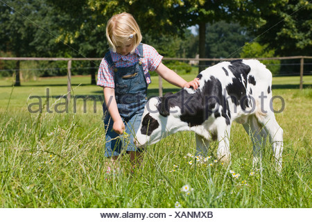 A girl stroking a calf - Stock Photo