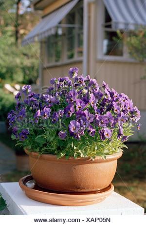 Flowers in a garden Sweden. - Stock Photo
