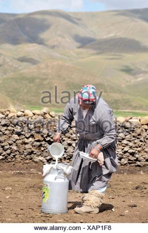 Dairy cow farming, woman filling fresh cow's milk into a milk churn, Altiplano Bolivian highland, Oruro Department, Bolivia - Stock Photo