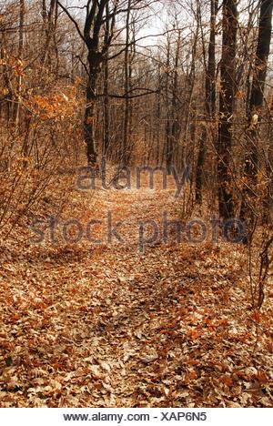 Autumn forest path - Stock Photo