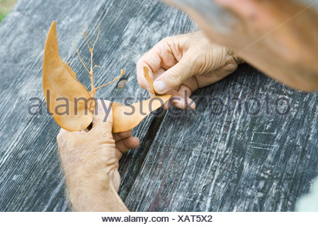 Man tearing leaf, over the shoulder view - Stock Photo