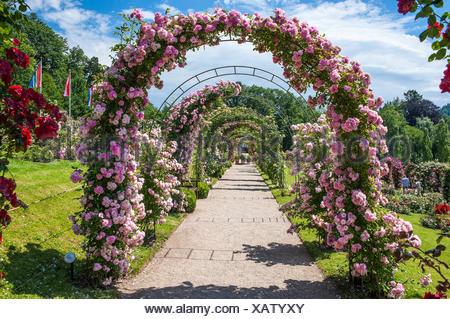 Rose arches in the Rose Garden, Rosenneuheitengarten on Beutig, Schwarzwald, Baden-Baden, Baden-Württemberg, Germany - Stock Photo