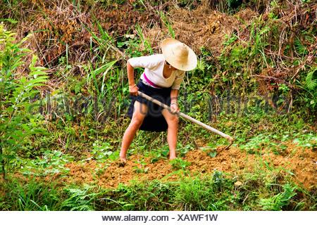 Mature woman digging a field, Jinkeng Terraced Field, Guangxi Province, China - Stock Photo
