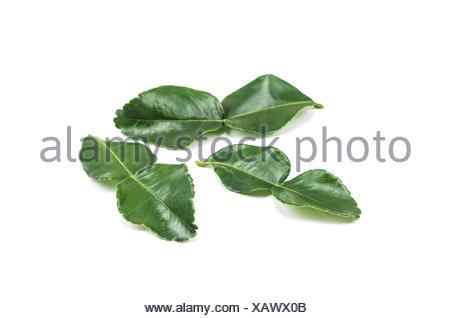 Bergamot leaves isolated on white background. - Stock Photo