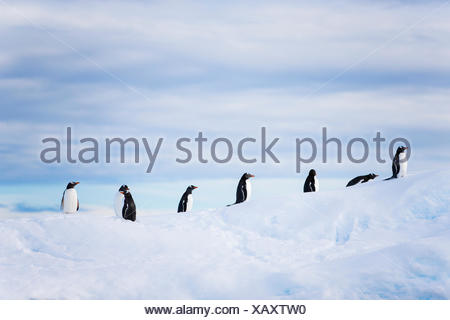 Penguins on top of an iceberg in Antarctica. - Stock Photo