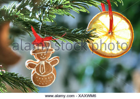 Painted gingerbread, christmas decoration settled on a christmas tree - Stock Photo