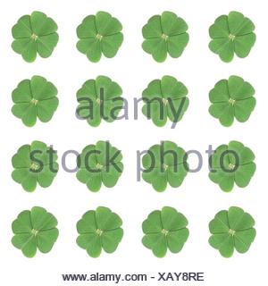 Sixteen four-leaf-clovers arranged symmetrically - Stock Photo