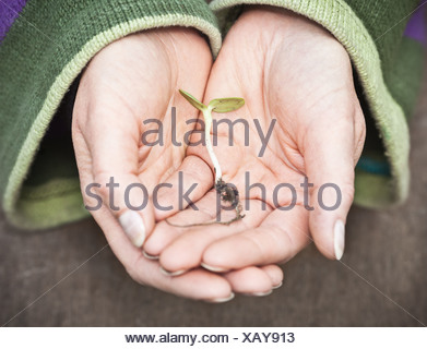 Woman cupping sprout in hands - Stock Photo