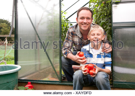Smiling father and son picking ripe tomatoes in greenhouse garden - Stock Photo