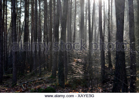 Mysticism with backlight. - Stock Photo