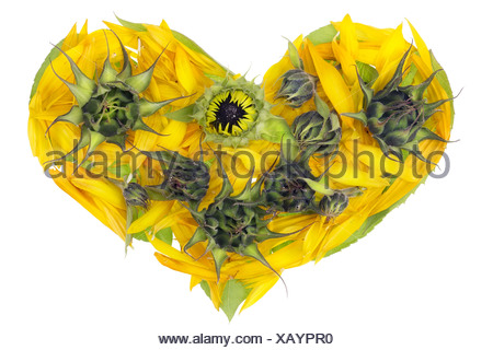 Abstract sunflowers heart - Stock Photo