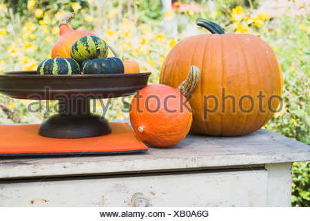 Assorted squashes and pumpkins on garden table (outdoors) - - Stock Photo