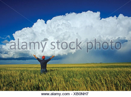 A farmer looks out over a barley field with a cumulonimbus cloud mass in the background near Bromhead, Saskatchewan, Canada - Stock Photo