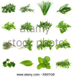 spice isolated collection - Stock Photo