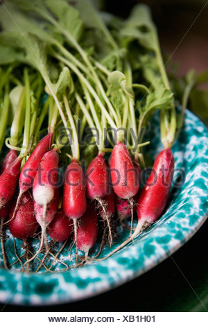 Fresh radish on plate - Stock Photo