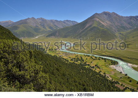 Centuries-old juniper forests near Reting Monastery, Tibet, Asia - Stock Photo