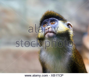Squirrel monkey in a branch - Stock Photo