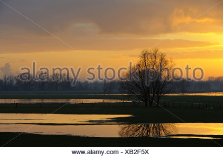 flooded meadows at Lower Rhine region at sunrise, Germany, North Rhine-Westphalia, Lower Rhine, Rees - Stock Photo