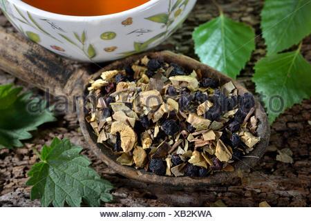 Liquorice root tea blend, birch leaves, stinging nettle, anise, blueberries / (Glycyrrhiza glabra, Betula pendula, Urtica dioica, Pimpinella anisum, Vaccinium myrtillus) - Stock Photo
