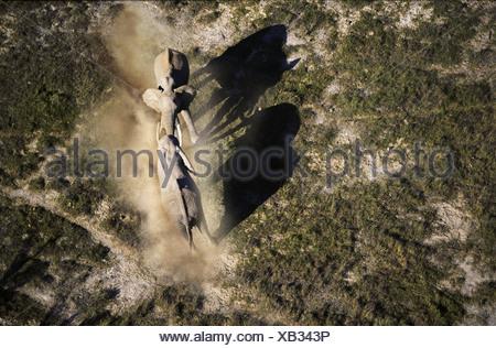 Aerial view of elephants fighting Amboseli National Park Kenya - Stock Photo