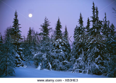 Full moon over forest - Stock Photo