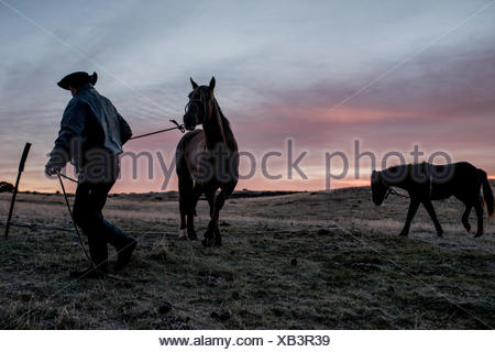 A cowboy gets his horse ready in the morning on a ranch in Tierra del Fuego, Chile. - Stock Photo