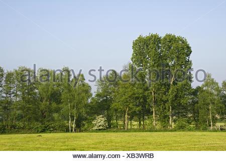 Summerly landscape with broadleaf tree - Stock Photo