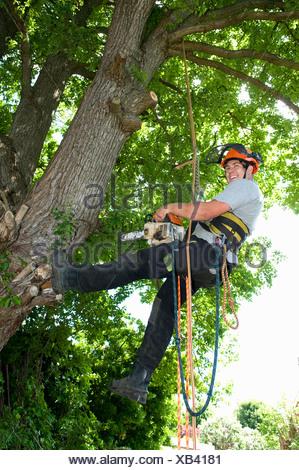 Tree surgeon working on tree - Stock Photo