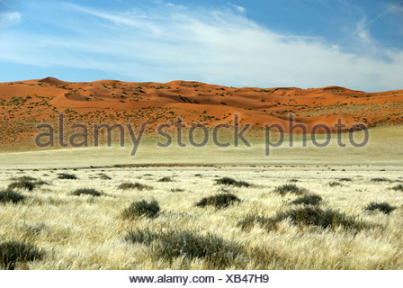 red dunes in the desert, Namibia, D707 - Stock Photo